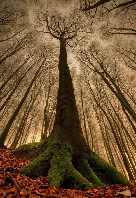 Et træ der falder