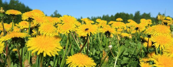 Den Stille Vej – Økologisk Spiritualitet
