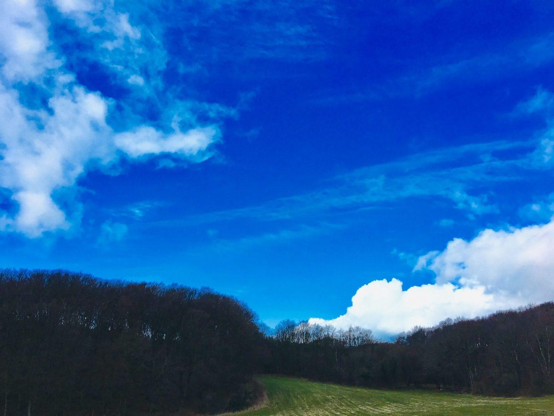 Blå himmel over en skov der er omkranset af en grøn mark. Anja Dalby: Ondt i maven