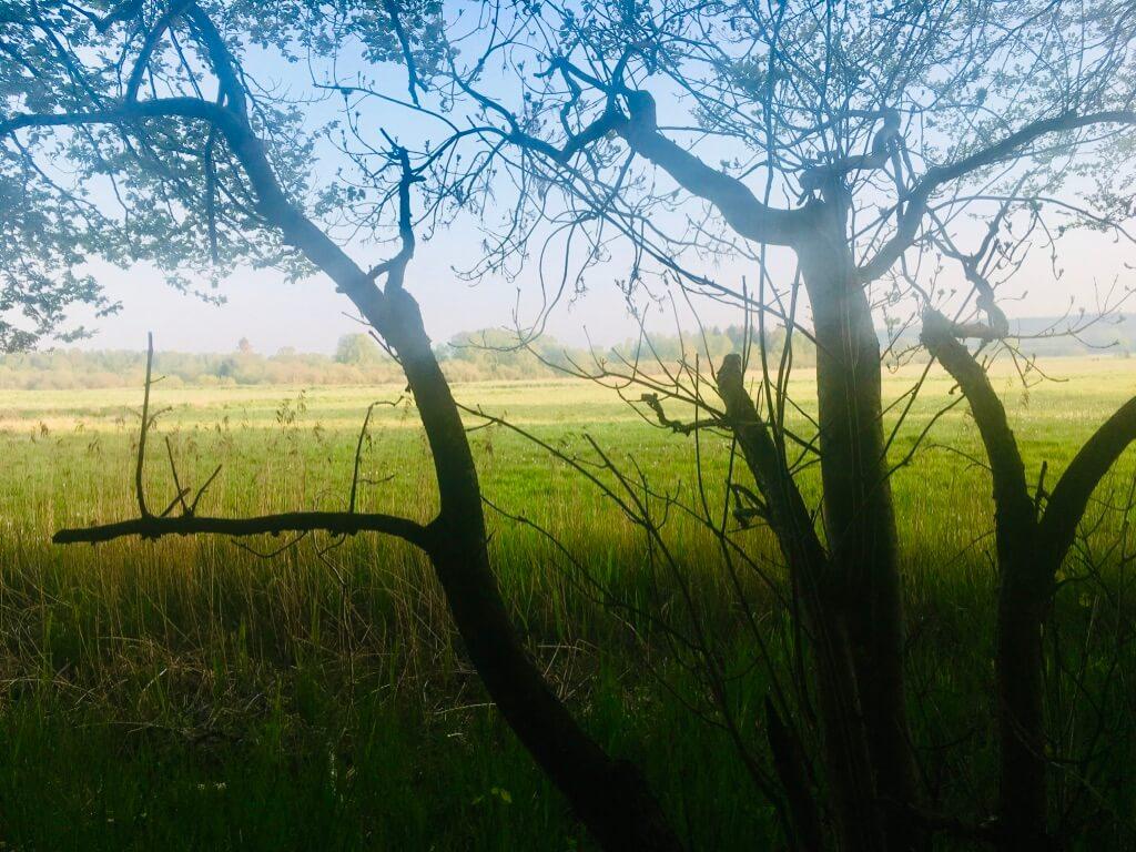Anja Dalby: At bede bønner. Kig ud på en grøn eng inde fra skovens mørke.