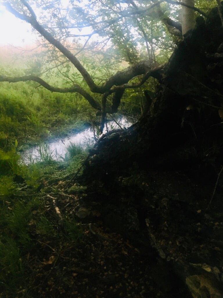 Naturen er Gud. Et kig ud fra skoven, et væltet træ og en lille bæk, der markerer skovbrynet.
