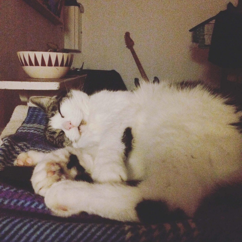 Katten Jonna sover sødt på Anja Dalbys sofa i huset i skoven.