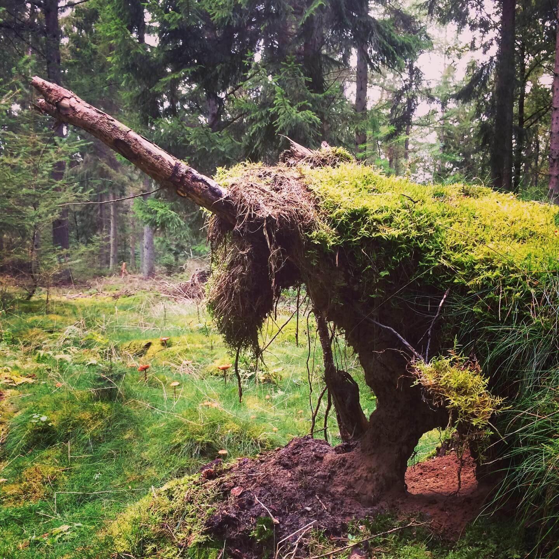 Anja Dalby træstamme enhjørning i skoven på Syddjurs