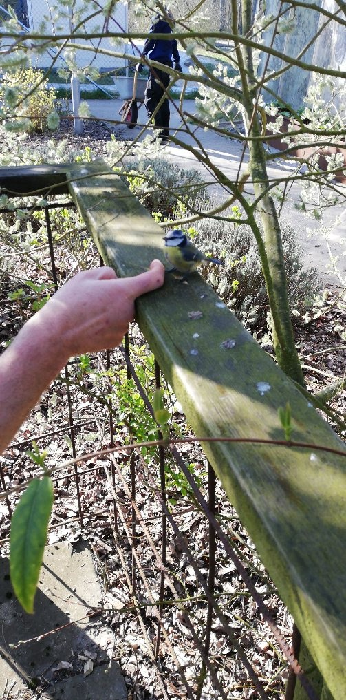 Jeg opdagede under en ayahuasca rejse, at vi alle er ét. Her er en lille  gulmavet fugl, der sidder på et stakit. Den sidder helt tæt op ad min finger.