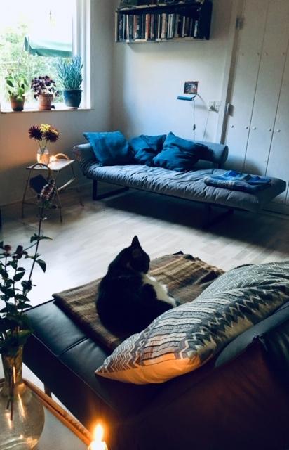 Forkæl dig selv ved at skabe et hyggeligt hjem. Anja Dalbys stue med bløde sofaer, katten der ligger og sover i en af dem og blomster på sofabord og i vindueskarmen.