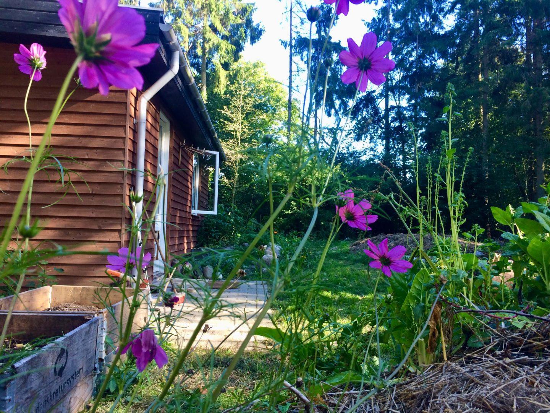 Anja Dalbys hus i skoven