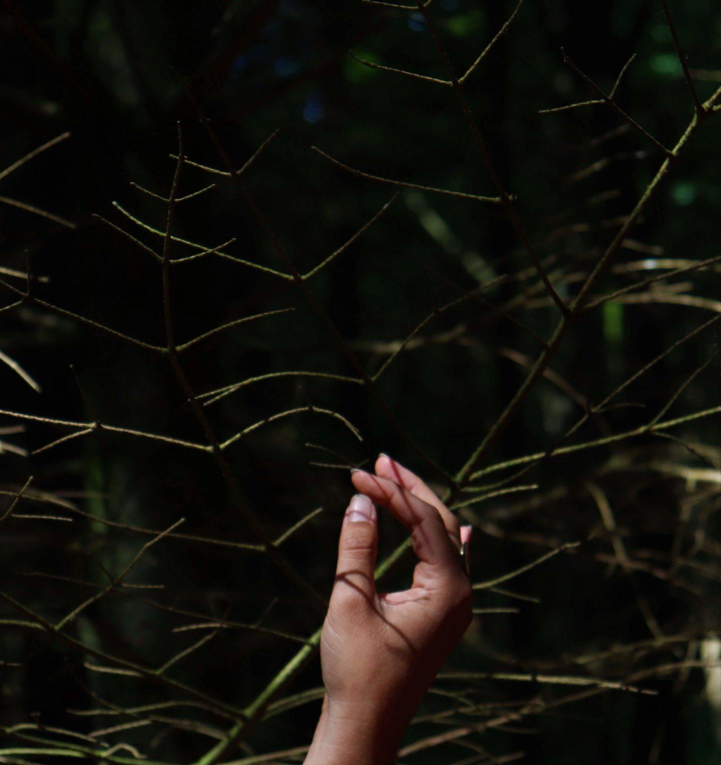Billede af Carina Lyalls hånd der hviler i grangrene.