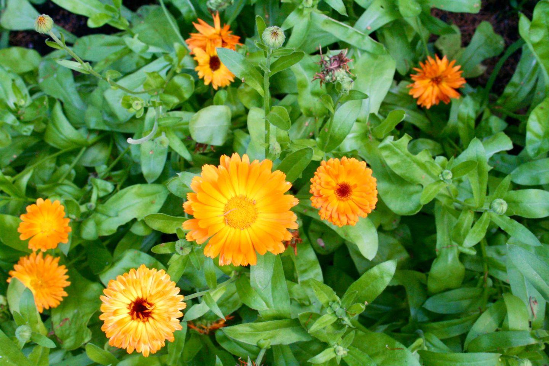 Slip frygten og nyd livets små skønheder som f.eks. blomsterne i haven.