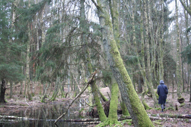 Naturen healer dig. Derfor bruger jeg så meget tid jeg kan i skoven.