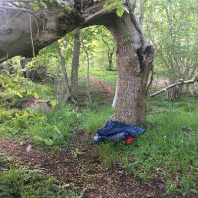Foto af sovepose ved et træ, efter en udesidning på Djursland.