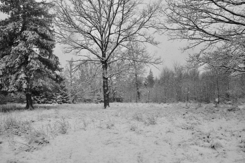 Hvordan du højner din vibration, besøg en sneklædt skov på Djursland.