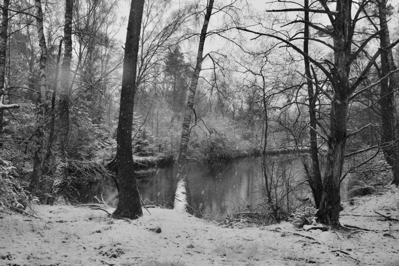 Hvordan du højner din vibration, besøg en hemmelig skovsø ved Skaføgaard på Djursland.