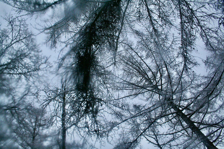 Trætoppe i snevejr i skoven ved Skaføgaard på Syddjurs. Sne er for mange også en god måde at blive vækket på. Til at undersøge hvad formålet med smerte er.