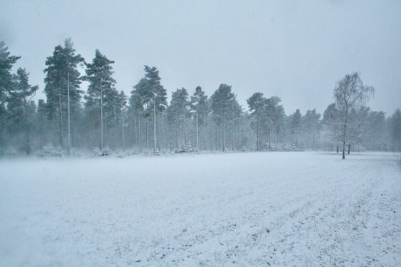 Snevejr i skoven ved Skaføgaard på Syddjurs. Sne er for mange også en god måde at blive vækket på. Til at undersøge hvad formålet med smerte er.