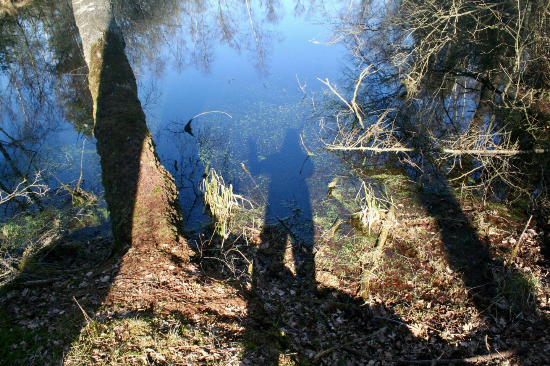 I naturen oplever jeg hele tiden en omprogrammering af min software. Her ved en sø i skoven ved Skaføgaard.